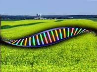 OGM_-_ADN