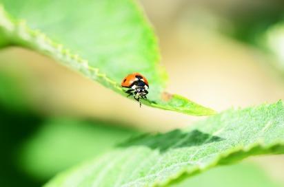 ladybird-335096_640