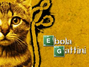 Ebola e gattini sarebbe stato più bello (foto dall'omonima pagina Facebook)